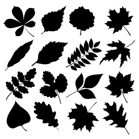 Black silhouettes of leaves isolated on white background. Vector illustration