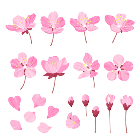 wite: Set of beautiful cherry tree flowers isolated on wite background. Collection of pink sakura or apple blossom, japanese cherry tree. Floral spring design elements.Cartoon style vector illustration Illustration