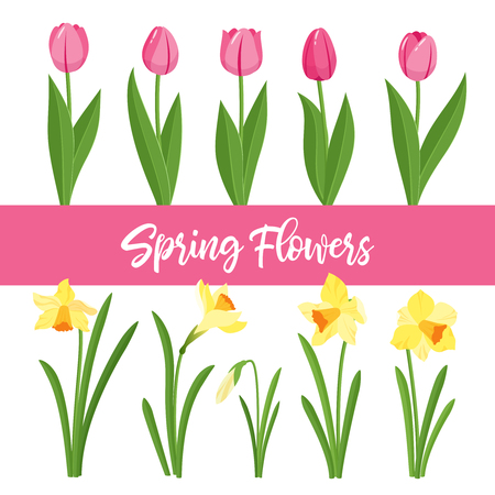 Spring flowers growing in the garden. Tulips and daffodils isolated on white background. Cartoon style vector illustration