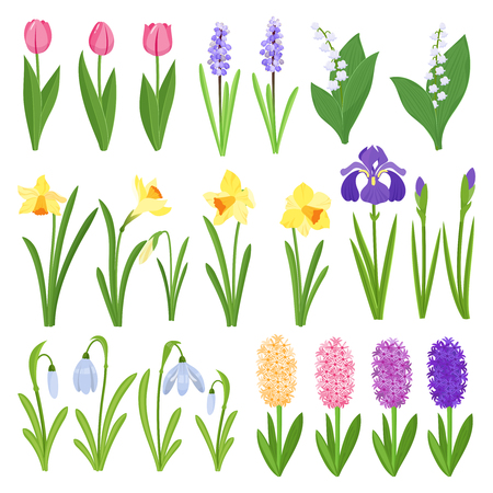 Spring flowers. Irises, lilies of valley, tulips, narcissuses, crocuses, snowdrops and other primroses. Garden design icons isolated on white background. Cartoon style vector illustration