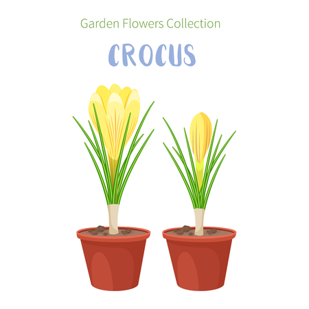 Spring flowers in flower pots. Irises, lilies of valley, tulips, narcissuses, crocuses and other primroses. Garden design icons isolated on white background