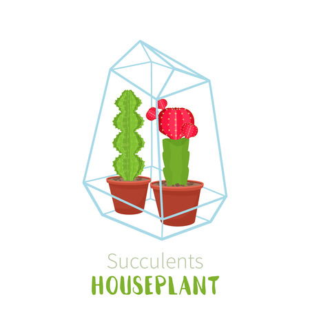 Geometric florarium with succulents set. Vector illustration. Illustration