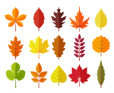 Colorful autumn leaves set, isolated on white background. Simple cartoon flat style, vector illustration.