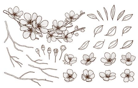 Almond blossoms hand drawn set. Spring flowers leaves ,buds and branches collected. Sakura,cherry, apple tree,plum blossoming elements isolated on white background. Ink pen vector illustration.