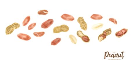 Peanut. Groundnut whole , halves, in shell and individual kernels isolated on white background set.Traditional and healthy peanut butter breakfast food. Watercolor illustration.