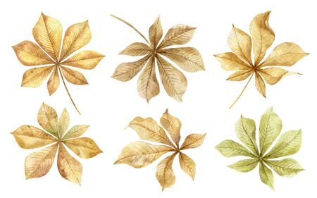 Chestnuts.Autumn leaves set isolated on white background.Traditional thanksgiving and fall season decoration.Gifts of nature for crafts with children.Hand drawn watercolor illustration.