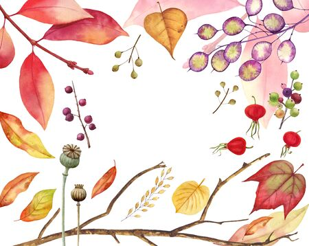 Autumn leaves frame isolated on white background.Tulip tree, oak, maple, ash, birch,beech, grapes decorative set. Leaf fall elements for Thanksgiving, Halloween and autumn holidays design.