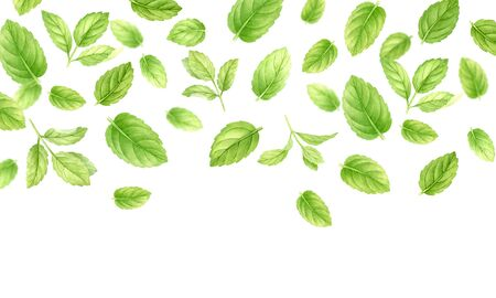 Fresh mint leaves and stems pattern isolated on white background, top view. Close up of peppermint. Spice medical and kitchen herbs digital clip art.Watercolor food and healthcare illustration Reklamní fotografie - 135496568