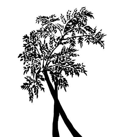 Hand drawn Black and White Tree Silhouette Element