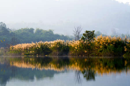 Bomen en reflectie Stockfoto