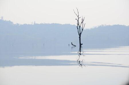 Boom zonder bladeren in de rivier