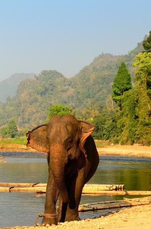 Thaise olifant voor het vervoer van toeristen