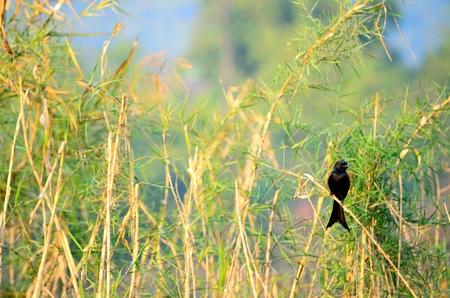 Zwarte vogel op de brach. Stockfoto