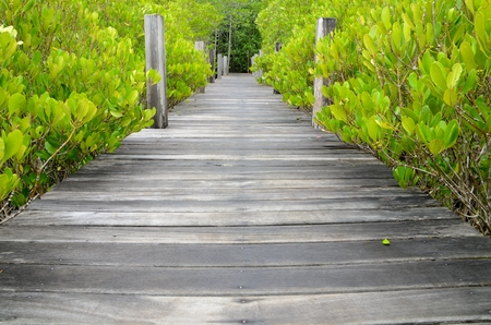 Wandelpad gemaakt van hout en de mangroven