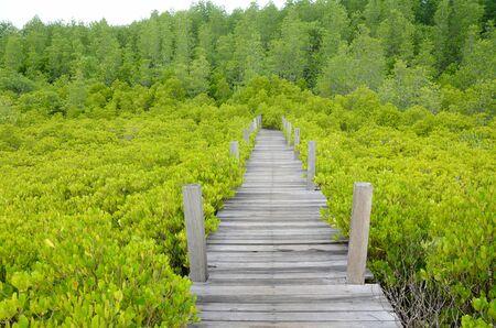 Loopbrug gemaakt van hout en de mangroven