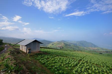 Een hut en een koolboerderij in de bergen