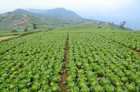 Kool boerderij in de bergen Stockfoto