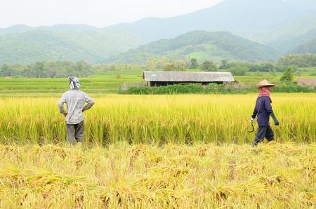 Twee boeren in de rijst ingediend