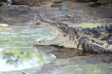 Cash in mouht de krokodil bij Sam Pran Krokodillenboerderij