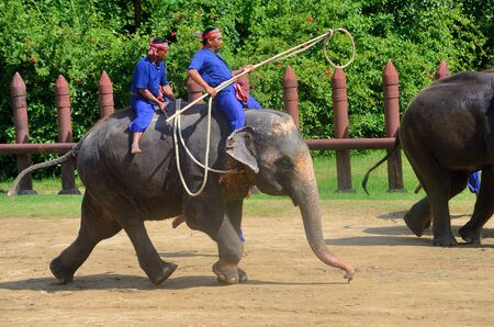 NAKHON PATHOM-oktober-31: The Elephant round-up show in Sam Pran Crocodile Farm op Oct31, 2015 in Nakhon Pathom, Thailand. Stockfoto - 53420484