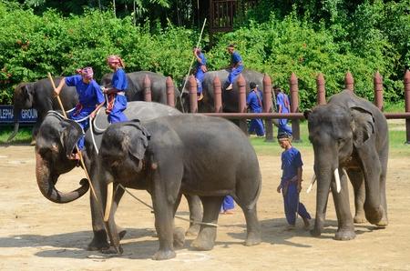 NAKHON PATHOM-oktober-31: The Elephant round-up show in Sam Pran Crocodile Farm op Oct31, 2015 in Nakhon Pathom, Thailand.