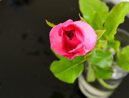 Roze roos in glas geïsoleerd met zwarte achtergrond Stockfoto