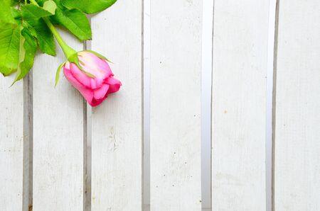Roze nam op wit hout Stockfoto