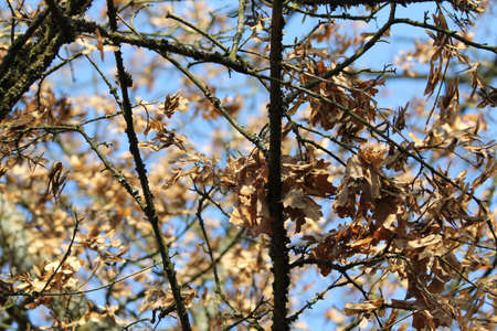 autumn tree  Stock Photo - 13407089