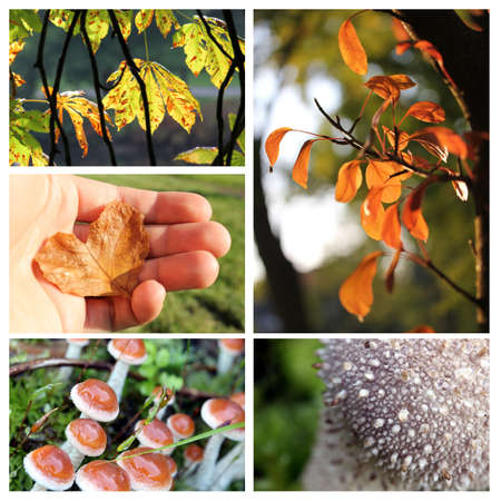 autumn collage photo