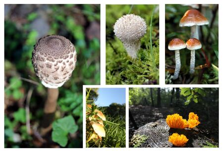 mushrooms collage photo