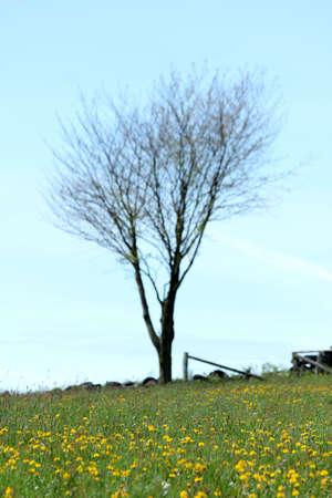spring meadow tree photo