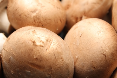 kitchen mushroom heads photo