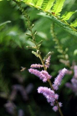 undergrowth: in the undergrowth