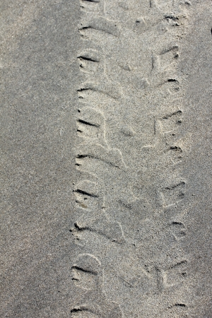 tire print at sandy beach photo