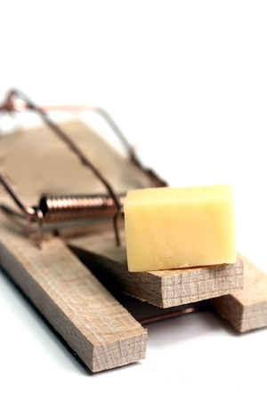 mouse trap: mouse trap with cheese