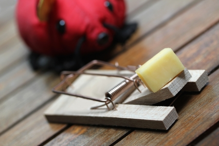mouse trap with cheese and a red plastic mouse