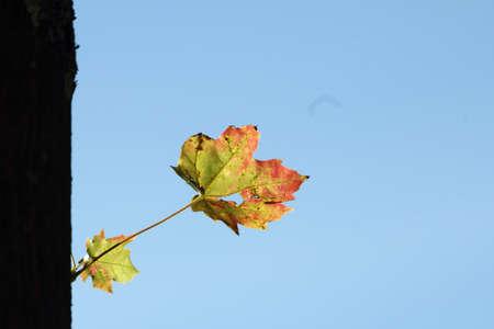 autumn nature leaf photo