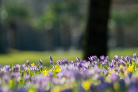 spring flower meadow photo