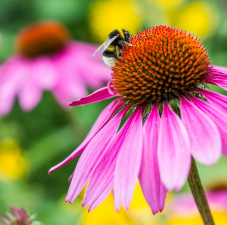 pink flower with bumblebee