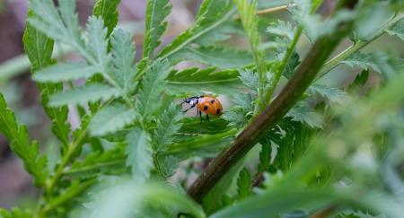 ladybug on plants photo
