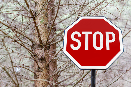 stop sign in the forest photo