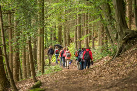 a group of walker in a forest Reklamní fotografie