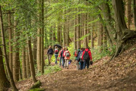 een groep van wandelaar in een bos