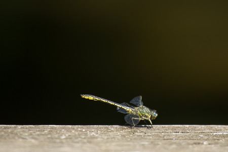 wood floor: a dragonfly on a wooden floor