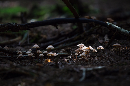 first autumn mushrooms in the forest photo