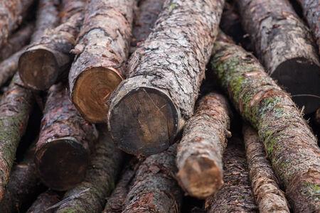 sawmill: sawmill