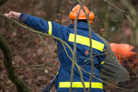 l petrol: people working in the forest