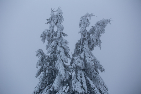 tree in winter forest photo