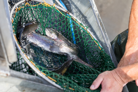 commercial fisheries: fish breeding ponds