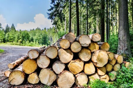 fresh cut logs in the forest Stockfoto